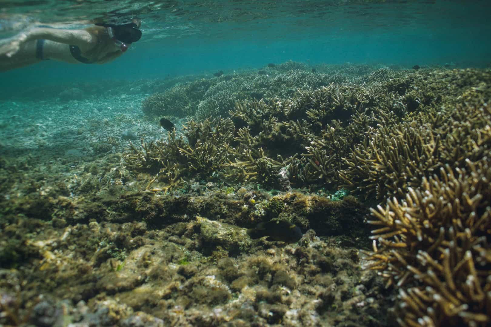 verschiedene Untergünde beim surfen Lava Riff Surfspot
